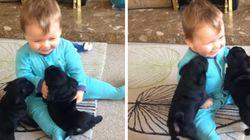 ASSISTA: Bebê brinca com filhotes de pug no vídeo mais fofo do