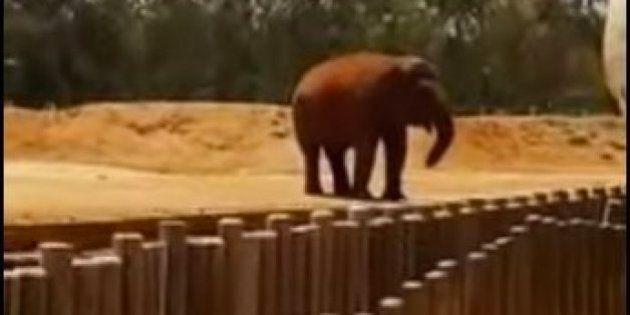 Elefante mata menina de 7 anos em zoológico no