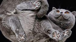 Fotógrafo retrata gatinhos sob um ângulo improvável em ensaio