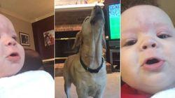 ASSISTA: Bebê de 5 meses vê cachorros uivando e tenta