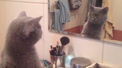 ASSISTA: Gato fica admirado com o próprio reflexo no