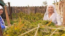 Mudança de hábito: na Califórnia, 'freiras' usam maconha para produzir