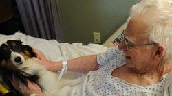 Hospital no Canadá permite que animais de estimação visitem