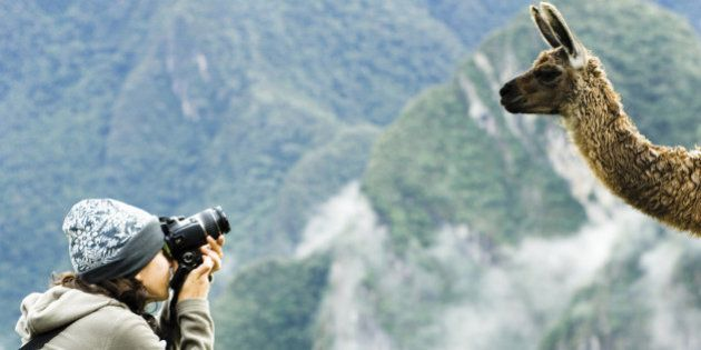 Woman taking a picture of a llama, Machu Picchu,