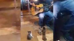 Este músico tocou para a melhor plateia possível: GATINHOS