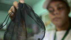 Dengue e zika vírus: você faz a sua