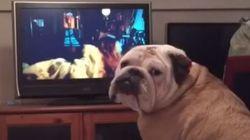 ASSISTA: Sai daí! Cachorro 'alerta' personagem de filme de terror sobre
