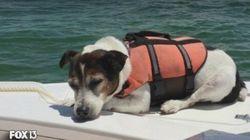Este cãozinho foi resgatado e sobreviveu após horas à deriva em
