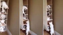 Nhóoommm! Filhotes de gato brincam em