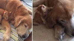 Este vídeo prova que a amizade entre cães e gatos existe, SIM!
