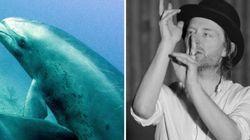 Aparentemente, os golfinhos gostam (bastante) de Radiohead e música