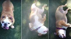 ASSISTA: Cachorrinho mostra como se refrescar e se divertir: Com irrigadores de