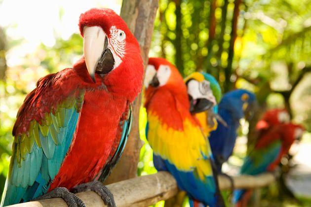 Οι παπαγαλίνες προτιμούν για συντρόφους τους... έξυπνους
