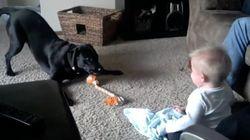 ASSISTA: Bebê cai na gargalhada quando cachorro late e animal se