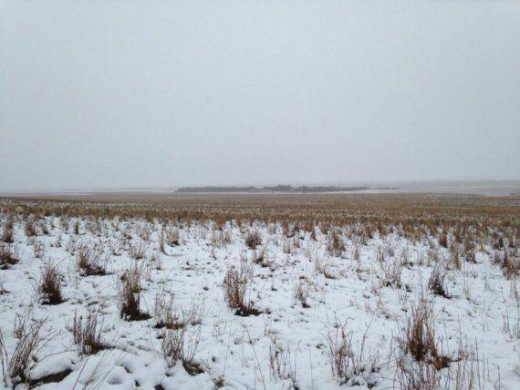 Você consegue ver as mais de 500 ovelhas que estão nesta