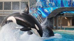 SeaWorld anuncia fim de shows acrobáticos com