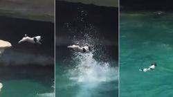 ASSISTA: Cachorro vê pessoas nadando e se joga na água