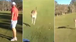 ASSISTA: Canguru persegue carro e tenta atacar golfistas na