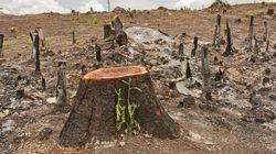 A luta contra o desmatamento e as mudanças climáticas também é