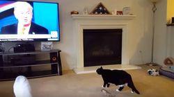 ASSISTA: Este gato tem mais medo do Donald Trump que