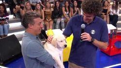 Guga, o 'labrador humano', ganha filhote de labrador de Luciano