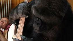 ASSISTA: Gorila faz aquele som maneiro com baixo de Flea, do Red Hot Chili