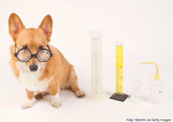 8 clichês científicos que na verdade são