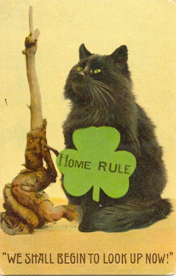 Conheça a história bizarra dos memes de gatinhos