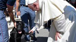 Leo, o cão que salvou garotinha em terremoto, é abençoado pelo