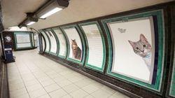 Publicidade? Que nada! Estação de metrô é 'invadida' por GATOS no lugar de
