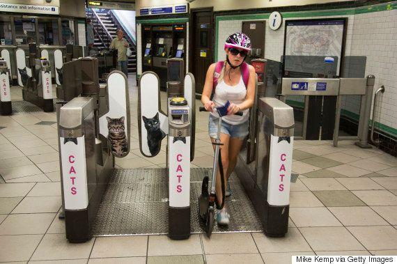 Campanha coloca gatos no espaço de publicidade em estação de metrô