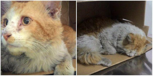 Este gatinho foi abandonado e atropelado. Mas você pode ajudar na recuperação