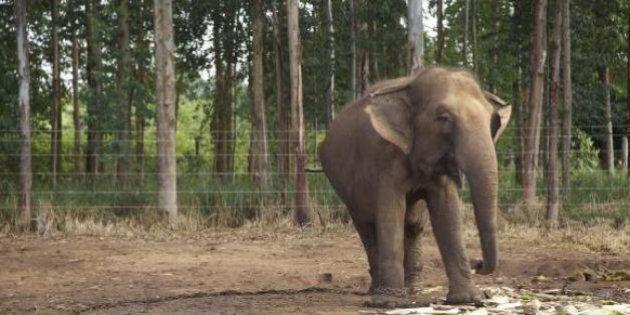 Brasil terá santuário de elefantes na Chapada dos