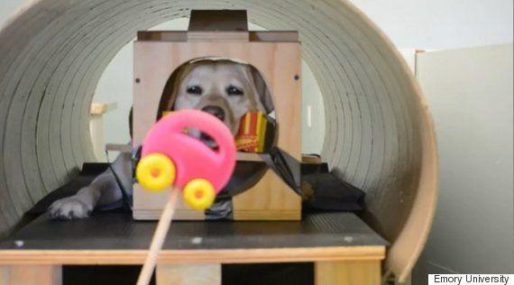 Cachorros gostam mais de elogios do que de comida, revela