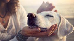 Espertinhos: Cachorros gostam mais de elogios do que de comida, diz