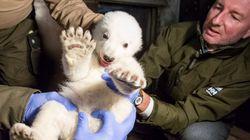 As fotos do check-up deste filhote de urso polar vão ganhar seu