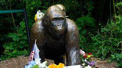 As diferentes (e perturbadoras) respostas às tragédias na Disney e zoológico em
