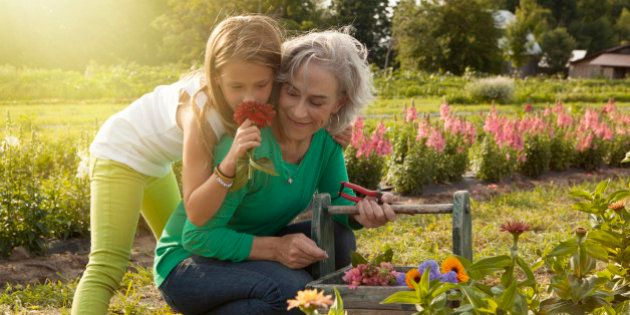 Caucasian grandmother and granddaughter picking flowers on