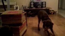 ASSISTA: Cachorra empolgada imita criança deslizando no