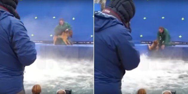 Empresa que treinou pastor alemão para 'Quatro Vidas de Um Cachorro' diz que vídeo de maus-tratos foi...