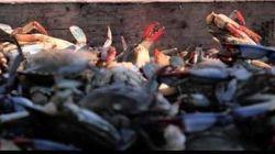 Graças à tecnologia, você vai saber a verdadeira origem dos frutos do mar à sua