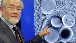 Vencedor do Nobel pode levar a avanços contra câncer, Parkinson e