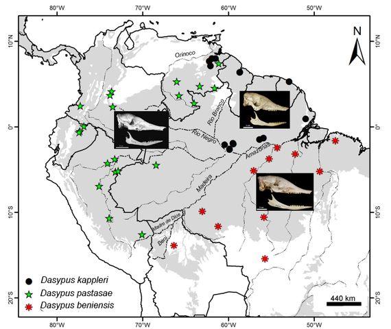 Duas espécies de tatu e uma de lagarto foram descobertas no Brasil em apenas um