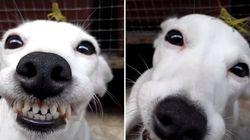 ASSISTA: Este cachorro está MUITO feliz por ter um grilo sobre sua