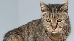 Este gatinho adorável pode ser o mais velho do mundo. Ele tem 31