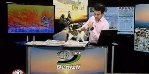 Na Turquia, gatinho de rua invade telejornal para ~noticiar sua fofura~