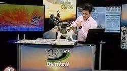 ASSISTA: Gatinho de rua invade telejornal para ~noticiar sua