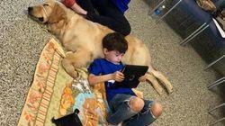 ❤ à 1ª vista define o laço entre este garoto autista e o cão que acaba de