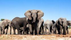 Desastre sem fim: Terra pode perder dois terços da vida selvagem até
