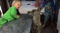 ASSISTA: Canguru curioso (e muito fofo) 'invade' van de família para